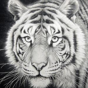 Tiger Illustration Engraved onto Anodised Metal